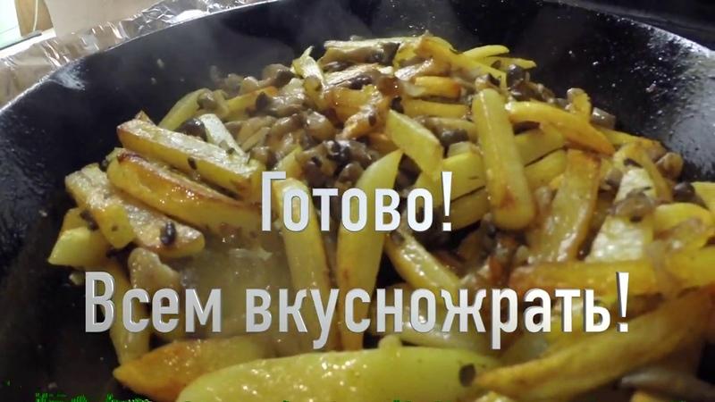 Грибы вешенки с картошкой всё как вы любите