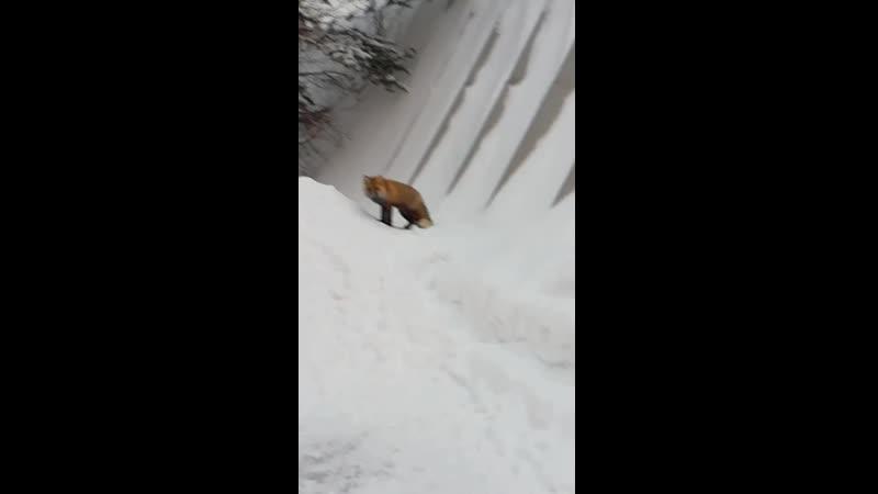 Кто-то ходит в лес за зверем,а у нас звери сами в гости ходят.2018-12-07 12-54-20
