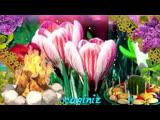 Видео С праздником Новруз байрамы