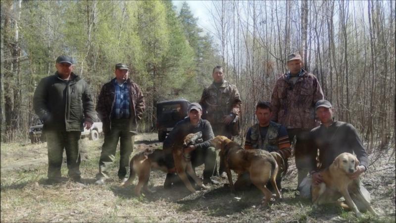Межрайонные Селивановские испытания гончих. Май 2019