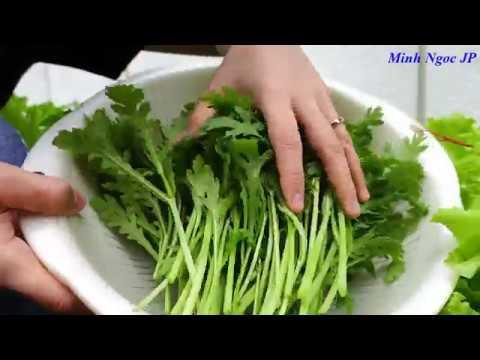 Tập 20 Thụ phấn cây bí ngòi, thu hoạch cải cúc, xà lách, trồng rau sạch trên đất Nhật