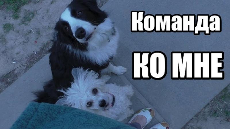 Как научить собаку команде КО МНЕ Дрессировка собак Понять собаку