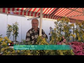 【k】france travel-nice _flower market_season_côte dazur_french riviera