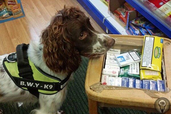 В Великобритании полицейской собаке пришлось скрываться после того, как за ее голову назначили крупную награду