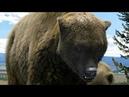 Nat Geo Wild Доисторические монстры - Короткомордый медведь
