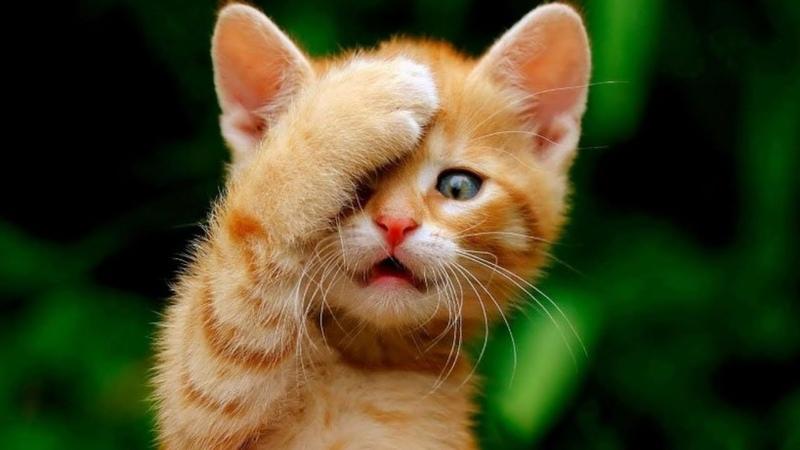 Я РЖАЛ ПОЛЧАСА Смешные Коты и Собаки ПРИКОЛЫ С ЖИВОТНЫМИ 22