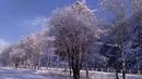 Последний мартовский снег в черемушках