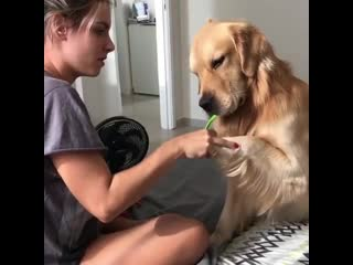 Cute doggo wanted to learn how to brush his teeth like an adult ... follow