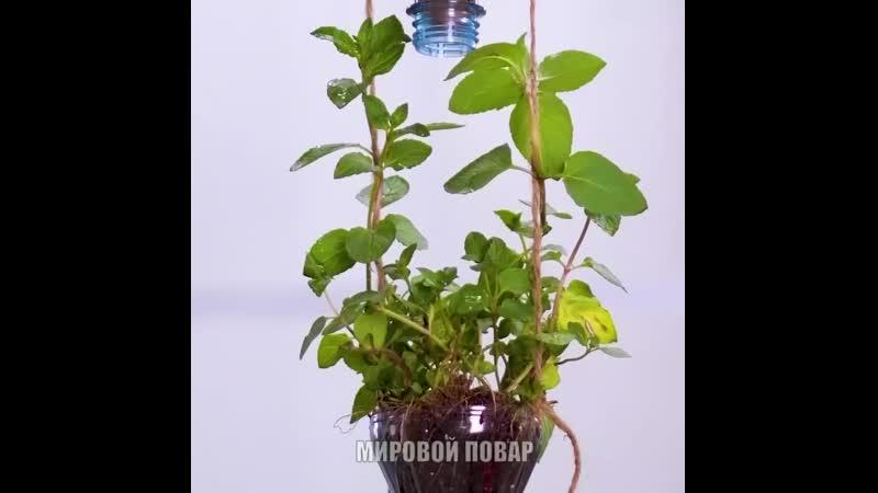 как правильно выращивать комнатные растения 2.0 цветы дом