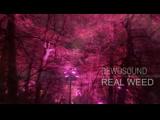 DEWOSOUND-REALWEED(при уч. Migos feat. Lil Uzi Vert)