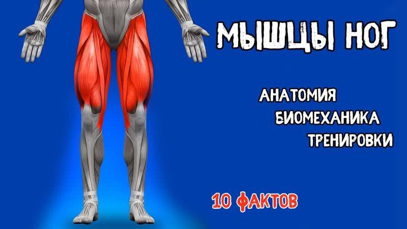 НОГИ. 10 Фактов. Тренировки, Биомеханика, Анатомия