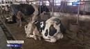В Подмосковье обнаружили заброшенное хозяйство с двумя сотнями погибающих животных