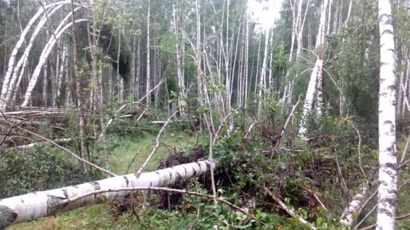 Переславль Орлёнок ураган повалил сотни деревьев