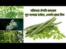 অলৌকিক গাছ সজিনার বিস্ময়কর ঔষধি গুন Miracle tree moringa