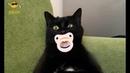 Приколы с кошками и котами 2. Подборка смешных и интересных видео с котиками и кошечками