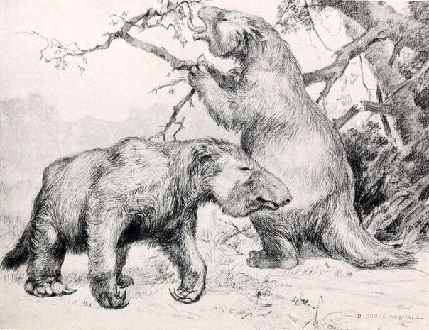 Доисторические мега-норы, которые были вырыты гигантскими ленивцами В северной части Южной Америки насчитываются сотни гигантских туннелей достаточно больших, чтобы в них мог разместиться