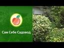 Садовый дизайн Два цвета в одном шаре