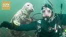 Случайная съёмка дайвера с тюленем получилась потрясающей Age0