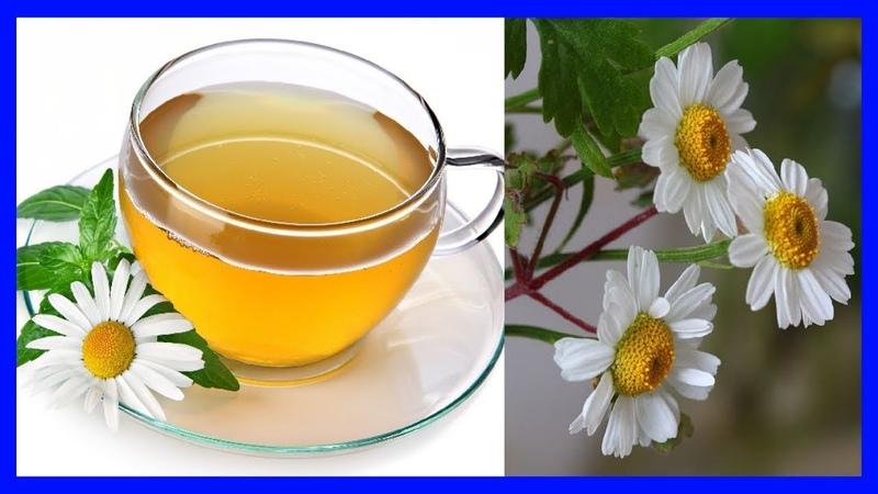 Planta Margarita Propiedades y Beneficios para la Salud