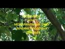 Монилиоз , болезни плодовых деревьев.