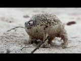When Gilgamesh Became Angry Frog HAAHA