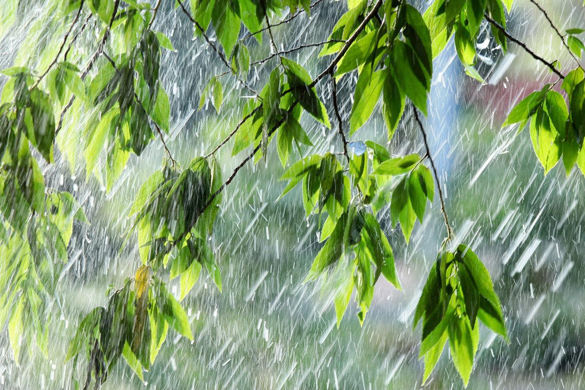 И дождь и солнце открытки