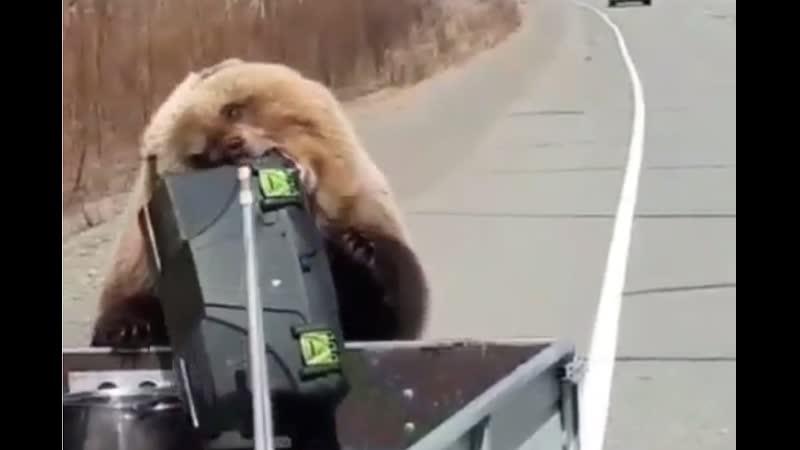 Наглый медведь на Камчатке обворовал машину охотников