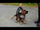 Polizeihunde im Dienst So behilflich sind Hunde geworden! DOKUMENTATION 2016 HD NEU