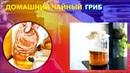 Домашний чайный гриб Чайный гриб цена отзывы купить