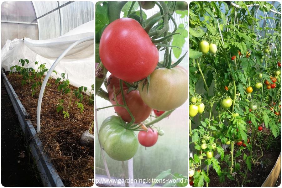 Урожайная теплица или как сажать в теплице, чтобы получить несколько урожаев за сезон