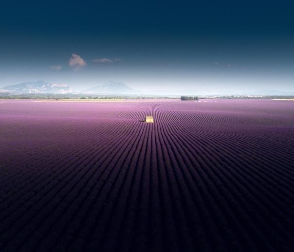 Лавандовые поля (Валансоль, Франция)