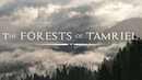 Jeremy Soule In The Forests of Tamriel Forest Pine Day BSA