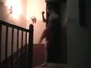 Поляк показывает как пробивать лоу кик повний угар