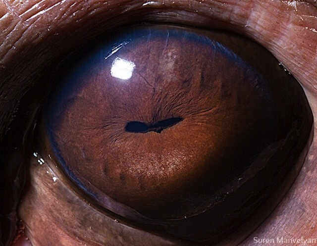 Удивительные глаза животных!