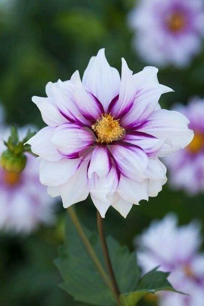 Люди, как цветы! Все разные, но каждый красив по-своему