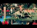 Bret Hart WWE HOF 2019 Attack Compilation 16 Views