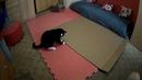 Котик разыгрался
