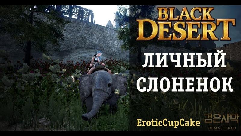 Как получить ездового слоненка? Black Desert