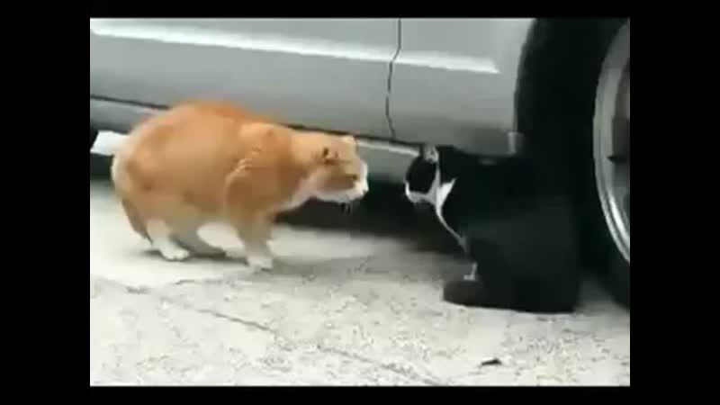 разговор кошек
