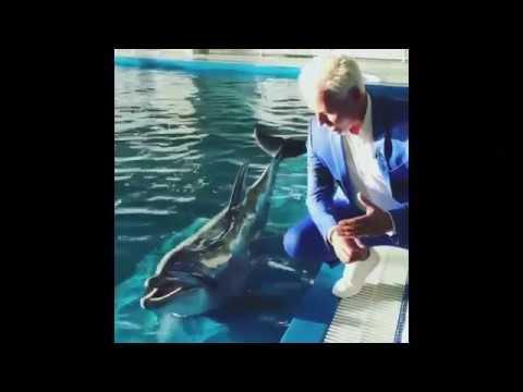 VITAS Dolphin_September 14_2018
