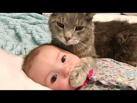 너무 사랑스럽고 재미있는 아기와 고양이 사이의 위대한 우정