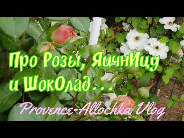 Розы и тля Дайте дождя плиз Омлет на скорую руку а ля провансаль provenceallochka vlog