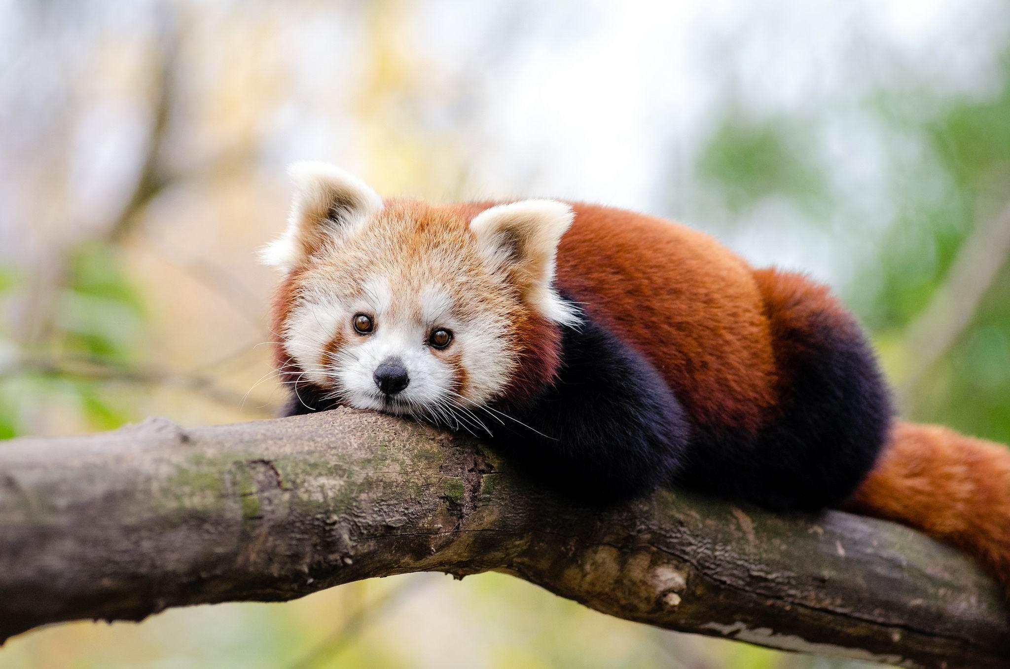 WWF: С 1970 года человечество уничтожило 60 процентов животных на Земле