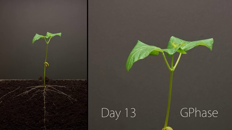 Торжество жизни ускоренная съемка роста семян срез земли
