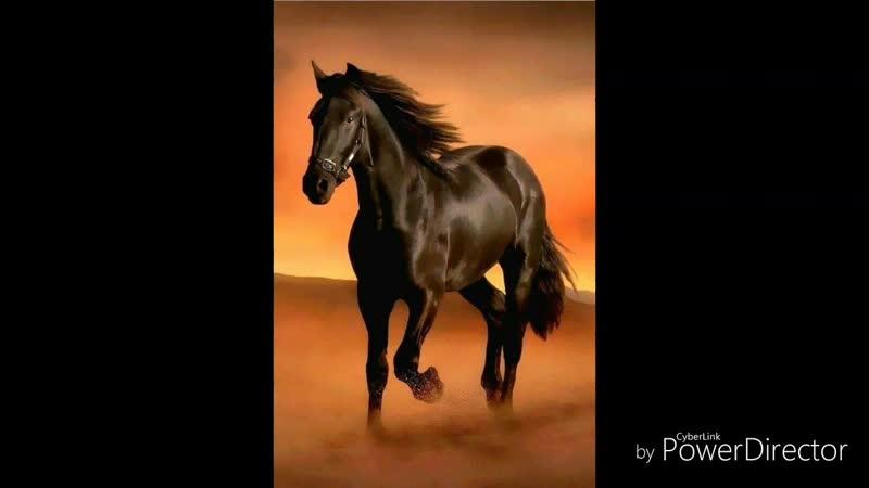 Cover Конь) Немного с моим русским-народным вокалом😁