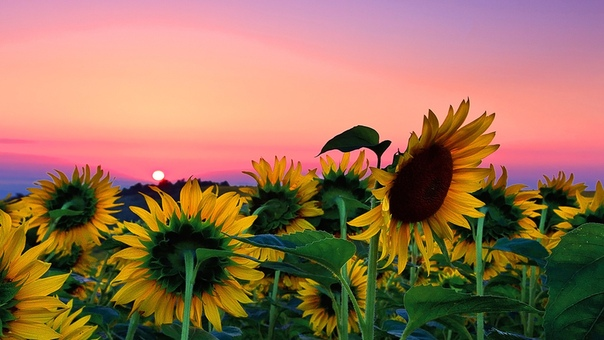 Доброго, прекрасного и удивительного вечера вам, друзья мои!)
