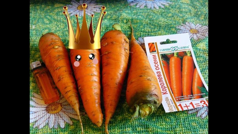 ✅ Как вырастить крупную морковь и собрать богатый урожай. Морковные секреты для высокого урожая