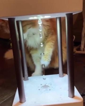 кот против гравитации