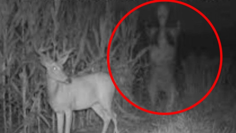 5 Scary Strange Creature Caught on Trail Camera - Paranormal TOP 5
