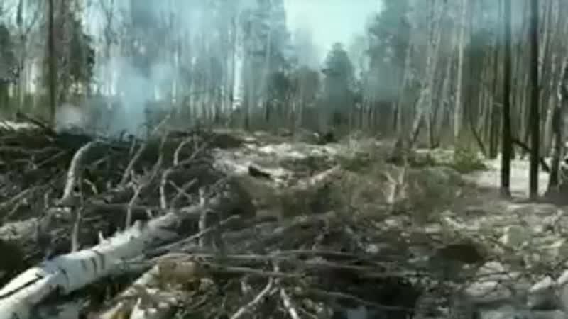 В Свердловской области у озера Балтым за 100 тысяч рублей продали под сруб 160 гектаров леса